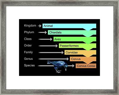 Biological Classification Framed Print