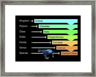 Biological Classification Framed Print