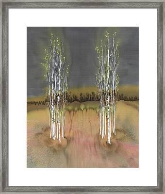 2 Birch Groves Framed Print by Carolyn Doe