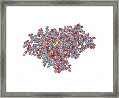Birch Pollen Allergen Framed Print by Dr Mark J. Winter