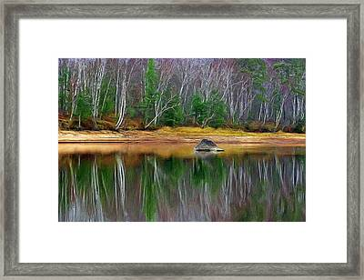 Birch Shoreline Framed Print by Pat Now
