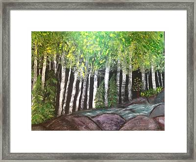 Birches By Falls Framed Print by Paula Brown