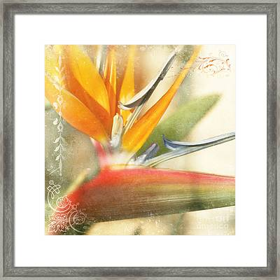 Bird Of Paradise - Strelitzea Reginae - Tropical Flowers Of Hawaii Framed Print by Sharon Mau