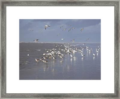 Birds At The Beach Framed Print