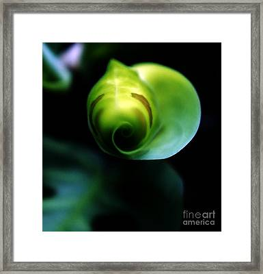 Framed Print featuring the photograph Birth Of A Leaf by Lilliana Mendez