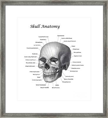 Black And White Illustration Of A Human Framed Print