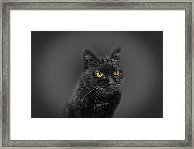 Black Cat Framed Print by Peter Lakomy
