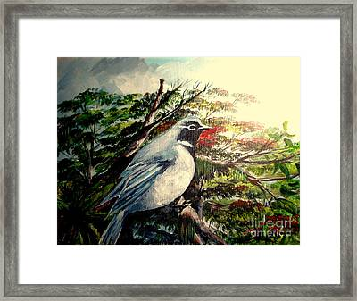 Black-throated Robin  Framed Print