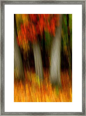Blazing In The Woods Framed Print
