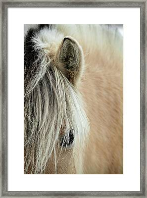 Blonde Framed Print by Odd Jeppesen