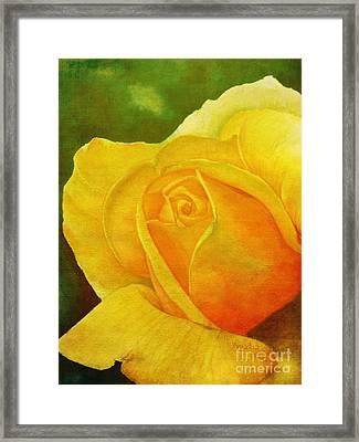 Blooming Beauty Framed Print by Anjali Vaidya