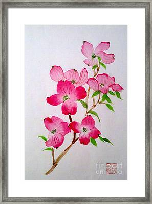Blooming Dogwood Framed Print