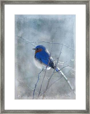 Blue Bird  Framed Print by Fran J Scott