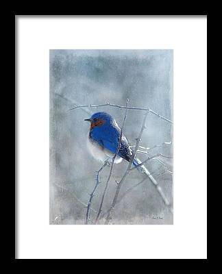 Birds In Snow Framed Prints