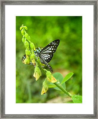 Blue Butterflies In The Green Garden Framed Print by Gina Koch