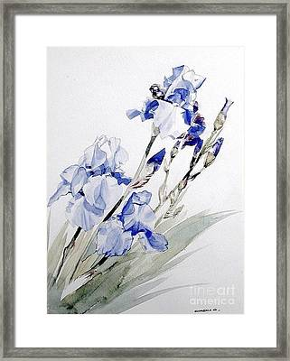Blue Irises Framed Print