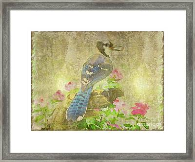 Blue Jay With Texture Framed Print by Debbie Portwood
