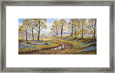 Bluebells In The New Forest Framed Print by Andrew Read
