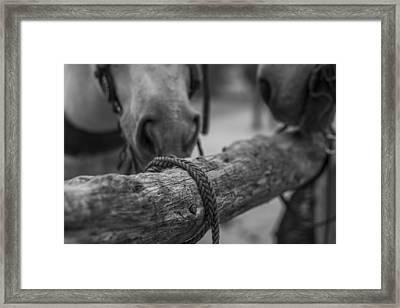 Braided Rope Framed Print by Amber Kresge
