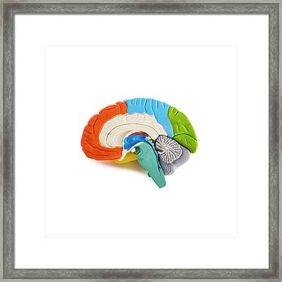 Brain Anatomy Model Framed Print by Science Photo Library