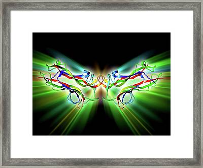 Brain-derived Neurotrophic Factor Framed Print by Alfred Pasieka