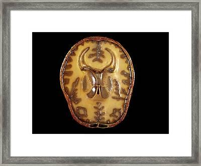 Brain Model Framed Print by Javier Trueba/msf