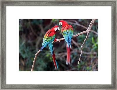 Brazil, Mato Grosso Do Sul, Jardim Framed Print