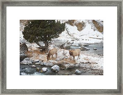 Breakfast Framed Print by Birches Photography