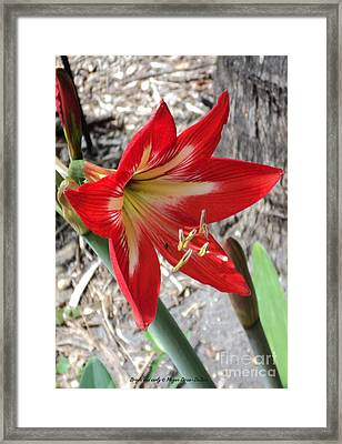 Bright And Early Framed Print
