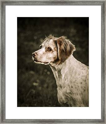 Brittany Framed Print by Bradley Clay