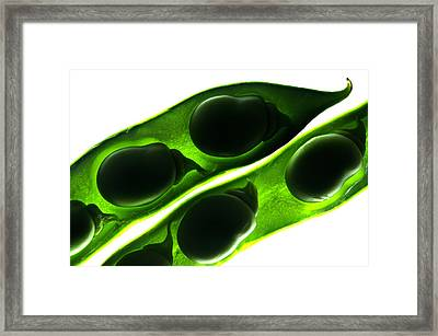 Broad Beans In The Pod Framed Print by Fabrizio Troiani