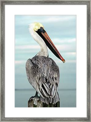 Framed Print featuring the photograph Brown Pelican by Geraldine Alexander