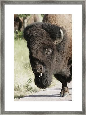 Buffalo Painterly Framed Print by Ernie Echols