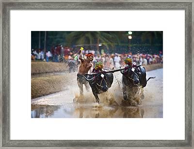 Buffalo Race Framed Print