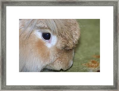 Bunny Framed Print