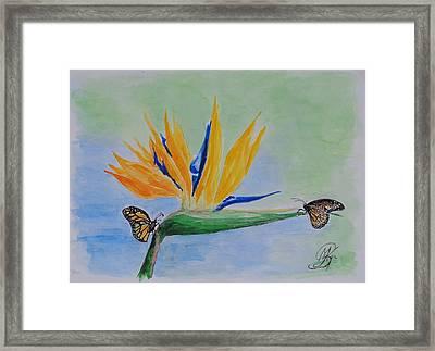 2 Butterflies On A Bird Of Paradise Framed Print by Kerstin Berthold