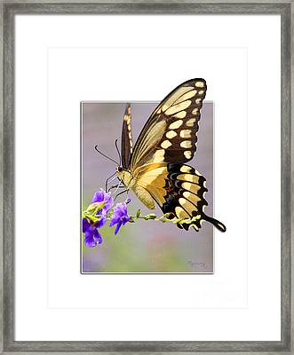 Butterfly Framed Print by Mariarosa Rockefeller