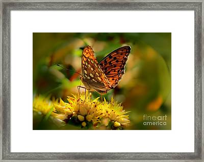 Butterfly Framed Print by Sylvia  Niklasson
