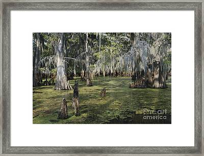Caddo Lake, Texas Framed Print by Gregory G. Dimijian, M.D.
