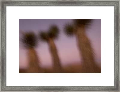 California Fan Palm Tree, Washingtonia Framed Print by Phil Schermeister