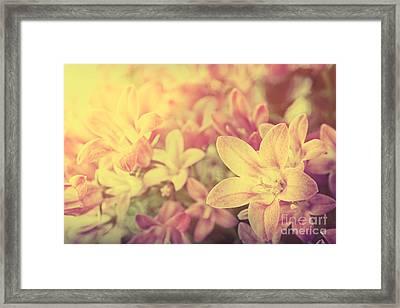 Campanula Floral Background Framed Print by Mythja  Photography