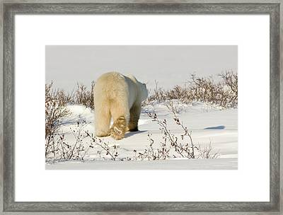 Canada, Manitoba, Hudson Bay, Churchill Framed Print by Jaynes Gallery