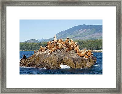 Canada, Pacific Rim National Park Framed Print by Jamie and Judy Wild