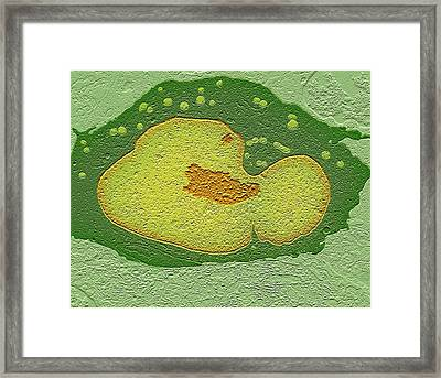 Cancer Cell Nucleus Framed Print by Science Photo Library