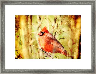 Framed Print featuring the photograph Cardinal by Trina  Ansel