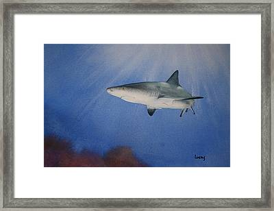 Caribbean Reef Shark 1 Framed Print by Jeff Lucas