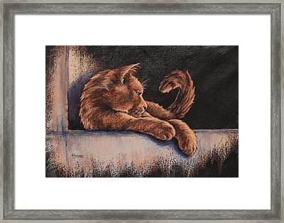 Catching The Last Rays Framed Print by Cynthia House