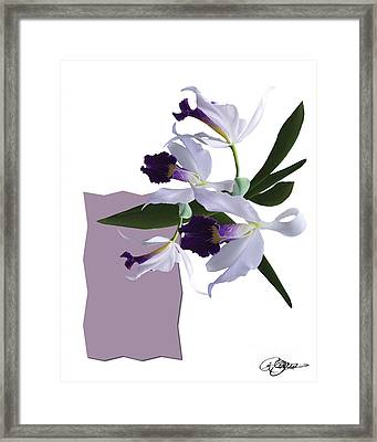 Cattleya Valentine Triage Dafoi Art 3 Of 3 Framed Print by Ruth  Benoit