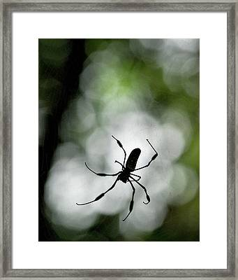 Central America, Costa Rica Framed Print by Jaynes Gallery