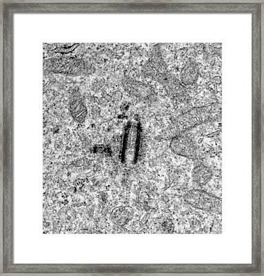 Centrioles Framed Print